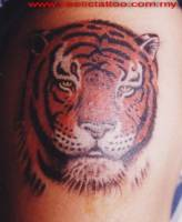 Tattoo a color de una cabeza de tigre
